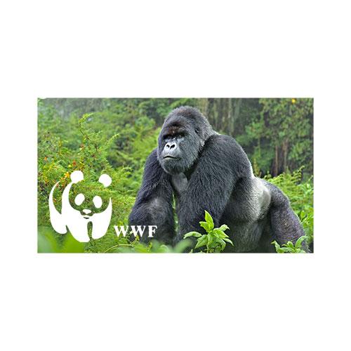 Grafik WWF
